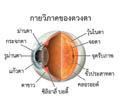 น้ำวุ้นตาเสื่อม ( Vitreous degeneration )