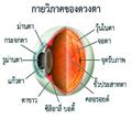 ต้อกระจก ( Cataract )